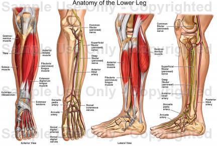 06 Legs: Downward Gravitational Pull